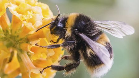 A Generic Photo of a Bee, PA Photo/thinkstockphotos. WARNING: This picture must only be used to acc