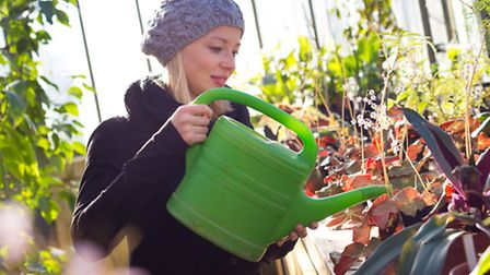 Watering plants in a greenhouse
