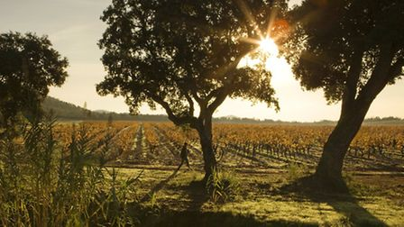The vineyards at Chateau de Leoube. Picture: Martin Morrell