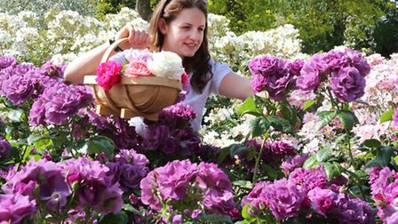 A member of staff in the rose garden at RHS Garden Wisley. PA Photo/Roger Allen/RHS