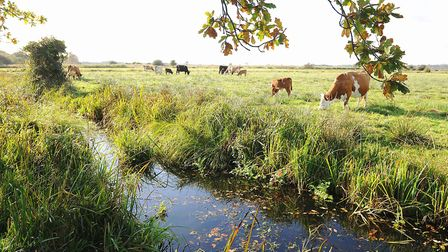 Carlton Marshes Nature Reserve. Picture: James Bass