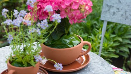 Tea cups can be charming planters