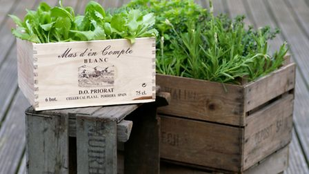 Grow salad in wine crates