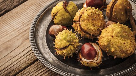 Collect conkers and arrange on a vintage metal plate