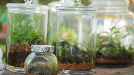 Terrariums are a great way to keep a bit of greenery in the house well into the colder months