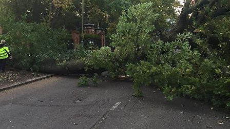 The tree has blocked the road south of the A1. Picture: MPSBarnet