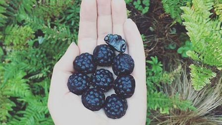 Such a delight foraging these blackberries from the pic n mix stand this morning. They're in season