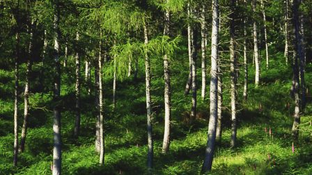 A Coniferous Forest. PA Photo/thinkstockphotos
