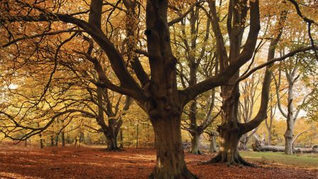 Brightly coloured autumnal leaves of woodland. PA Photo/Michael Caldwell