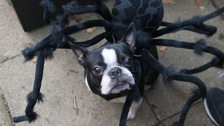 SpiderDog gives our photographer a menacing look.