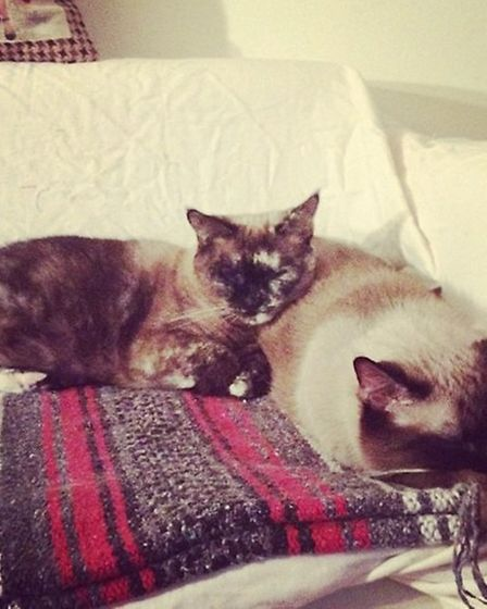Miss Kitte and Griffith, Meshell Boyle's two cats who sadly died in the fire