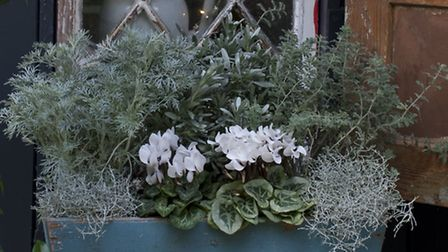 Frosty window box from The Winter Garden by Emma Hardy (photography by Debbie Patterson) is publishe