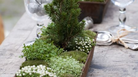 Tabletop trough from The Winter Garden by Emma Hardy (photography by Debbie Patterson) is published