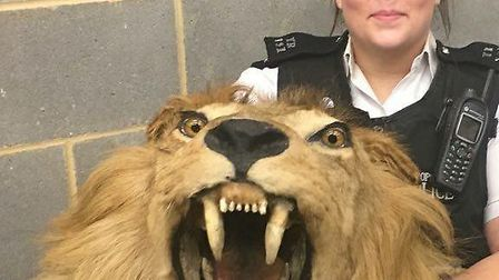 A Haringey police officer holds up a lion's head seized among other illegal animal products in a rai