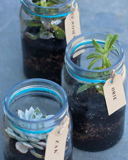These little planted jars make great gifts or place settings for festive meals. Photography � CICO B