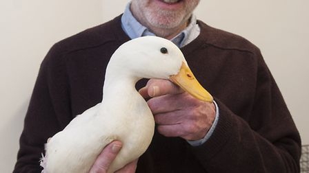 Highgate vet Allan Rapley with the rescued duck mauled by a dog. Picture: Nigel Sutton