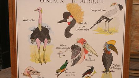 A Rossignol vintage French school poster showing the 'Birds of Africa'