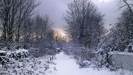 The Friends of Parkland Walk has released its own set of Christmas cards, all using images of the le