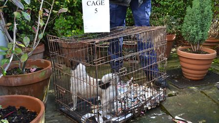 Evidence of the cages of one of the dogs in the trial