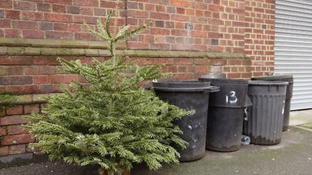 Where and when to recycle your natural Christmas tree in north London