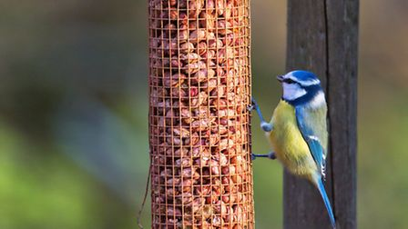 A blue tit eating from a bird feeder. PA Photo/thinkstockphotos