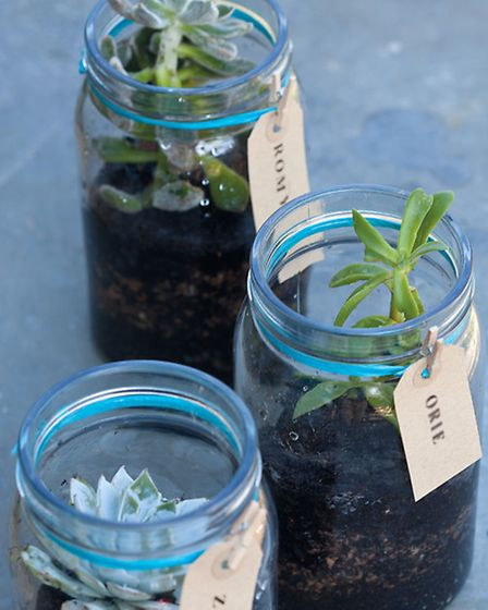 These little planted jars make great gifts or place settings for festive meals. Photography © CICO B