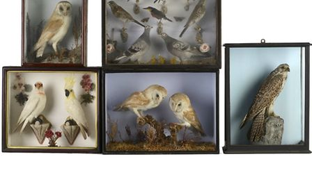 Barker Taxidermy collection