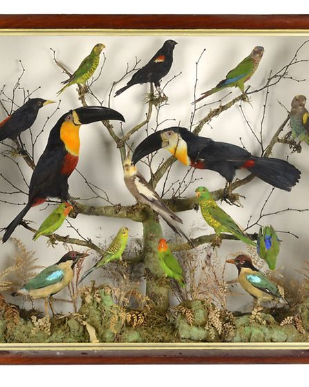 A case containing two toucans and an assortment of Australian parrots and pittas, �600-1,000