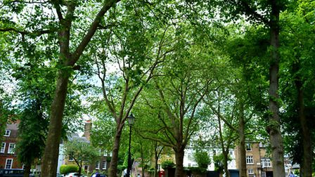 Highgate has become a hit with the Primrose Hill party set in recent years