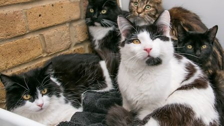 The cats rescued by Celia Hammond