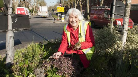 Bunty Schrager Guerrilla gardening at the Highgate roundabout