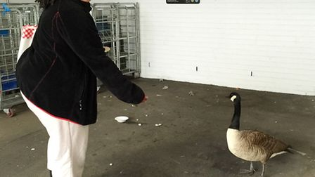 Leila Roy waited with the injured Goose for help to arrive