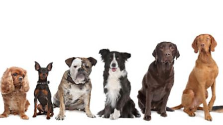 Which dog breed will suit your household best is not all about size