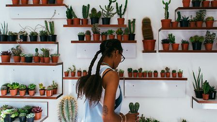 Gynelle in Prick, the cactus shop