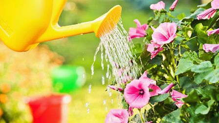 Get someone in to water your plants while you're on holiday. PA Photo/thinkstockphotos