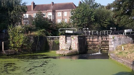 Duckweed on the Regent's Canal at Broadway Market (Picture: Will McCallum)