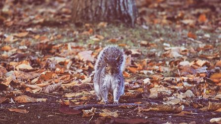 This photograph of a squirrel at Sparrow's Nest and Gardens, Lowestoft, has won The Journal's Pictur