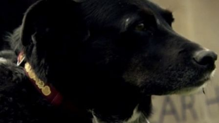 Sheila's dog Milly Snowflakes passed away last Christmas