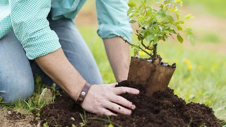A person planting a small plant. PA Photo/thinkstockphotos