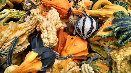 Artfully arranged gourds make for a more grown up display. Photo credit: Flickr / Zoopmon