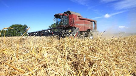 Harvest at Shipmeadow by Chris Arnold.