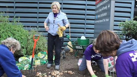 volunteers work on the Royal Free Garden