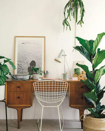 HOUSE OF PLANTS by Caro Langton and Rose Ray, photography by Erika Raxworthy, is published by France
