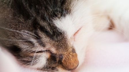 A file image of a grey and white kitten. Picture: Clemens V Vogelsang/Flickr/Creative Commons licenc
