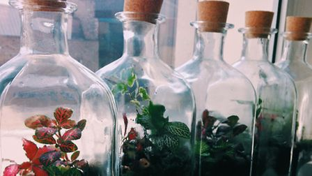 Teach someone how to make a terrarium and they'll have a living decoration that will last long after