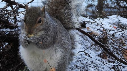 This close-up shot of a squirrel enjoying a nut on a snowy day has won The Journal's Picture of the