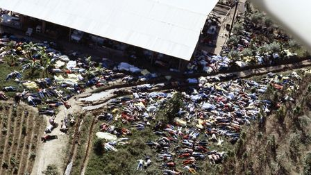 The corpses of members of the Peoples Temple cult after 900 died at Jonestown in the largest mass su