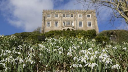 Snowdrops in the garden of Neward Park, Gloucestershire. PA Photo/National Trust Images/James Dob