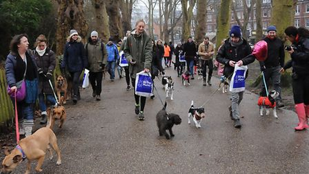 The dogs lead the way at the All Dogs Matter Valentine's Day walk. Photo: Dieter Perry