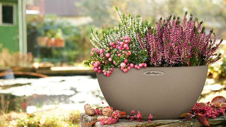 The Cubeto bowl planter, available from lechuza.co.uk